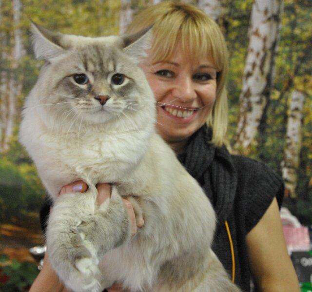Невские маскарадные кошки выставка